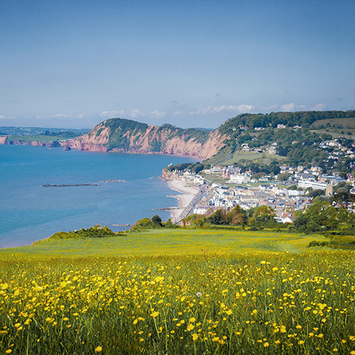Welcome to our Sidmouth blog