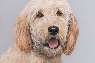 Devon Pet Portrait