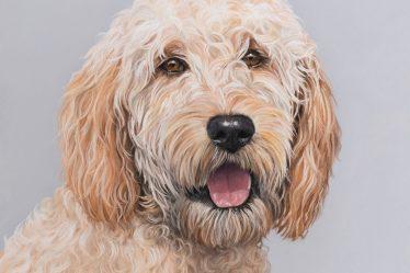 Devon Pet Portrait